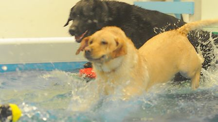 Dogs at Suffolk Canine Creche in Martlesham enjoying the pool.