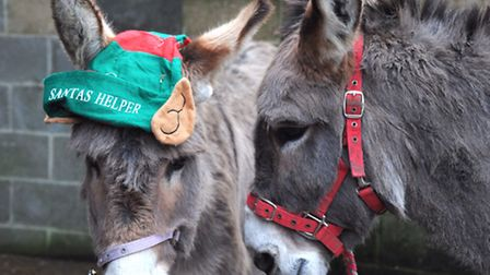 Lucy, the donkey (in hat) that saved the Christmas carol service at St Augustines Church for EACH af