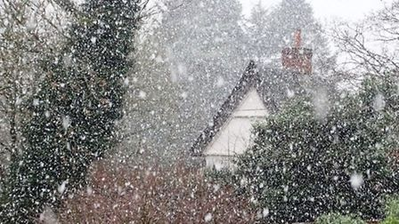 Snow falling in Woolpit on January 14, 2016 - photo by Pamela Bidwell
