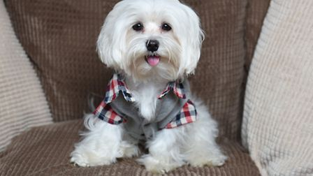 Teddy the Maltese has a wardrobe to be proud of