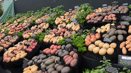 RHS Chelsea 2016 Potato display gold medal for amateur growers, with display sponsored by Thompson &