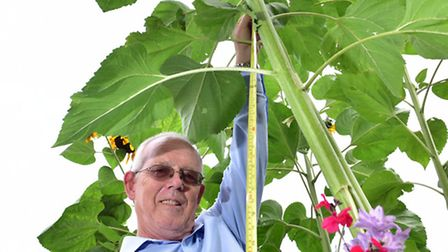 Keith and June Spurling have a sunflower in their garden which is over 10 feet tall.