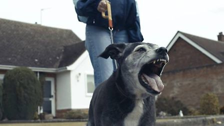Chloe the dog also appears in the film