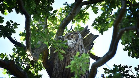 Mabel the owl has returned to Christchurch Park.