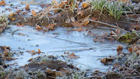 Puddles of water in the field with a layer of ice on. Photo by Allison Balaam