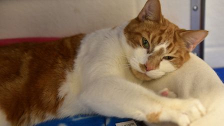 The Blue Cross rehoming centre in Wherstead, Ipswich, has helped over 800 animals find a new home si
