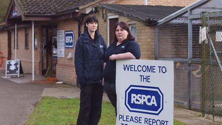 Two kittens have stolen from the RSPCA in Martlesham.The incident happened overnight on January 2. D