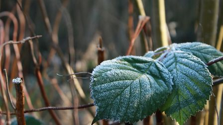 Early morning frost in Christchurch Park, Ipswich. By Graham Meadows