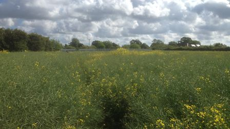 The Henley Gate development would be built in this area close to Westerfield Road. The field sits be