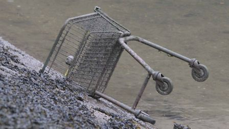 A shopping trolley dumped in the River Orwell doesn't appear to put off the birds.
