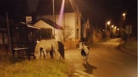 Horses were spotted wandering around close to Paper Mill Lane in Bramford on Tuesday morning