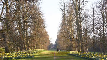 Lime Avenue, in Nowton Park. Picture: GREGG BROWN