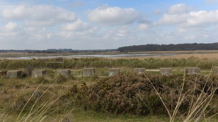 Minsmere Nature Reserve. Picture: SARAH LUCY BROWN