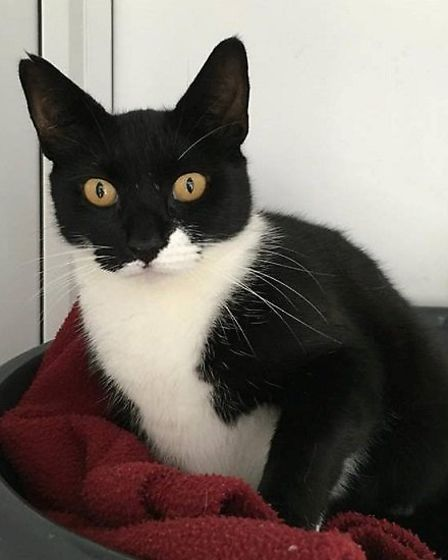 What about giving Whiskers the perfect home?