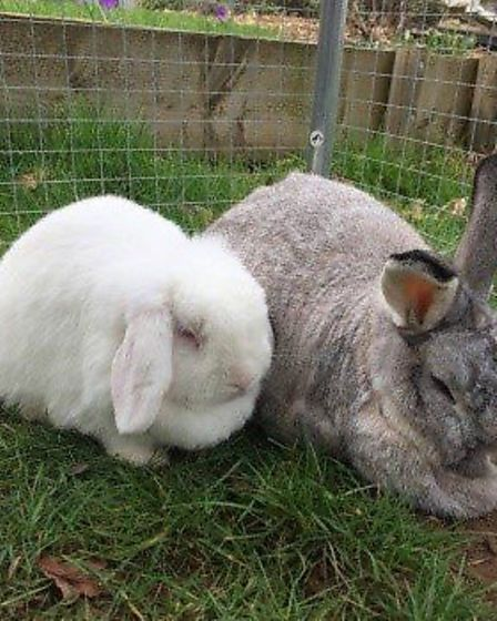 How about giving a home to Snuffles and Anya?