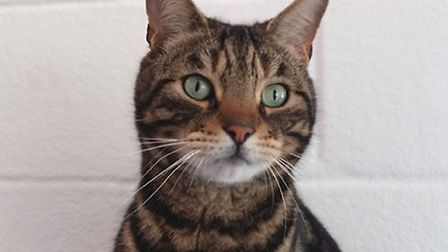 Could Tooks be the cat for you?