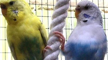 Flo and Mo are looking for a new home together. Picture: RSPCA SUFFOLK EAST AND IPSWICH