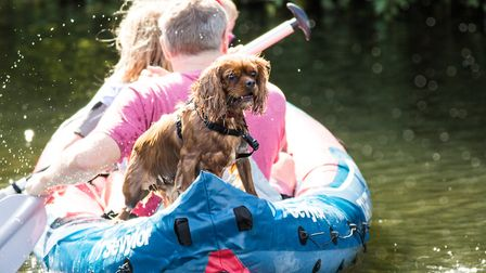 Little dog traveling on a boat. Picture: FRANCES CRICKMORE