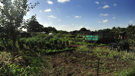 The Morland Road allotment was one of several broken into. File picture: LUCY TAYLOR
