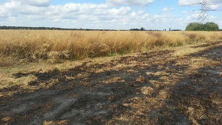 File picture of a burnt field. Picture: ARCHANT