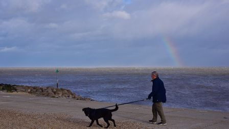 A dog enjoying a walk on Felixstowe beach in February. Picture: SARAH LUCY BROWN