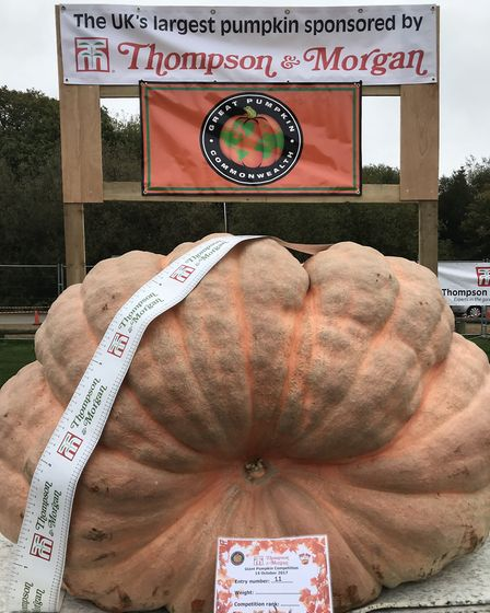 A giant pumpkin at the Autumn Pumpkin Festival in Southampton, sponsored by Thompson & Morgan. Pict