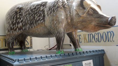 Reader favourite Hedgepig at the Pigs Gone Wild event