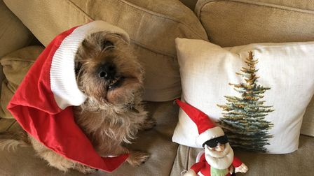 Which of these festive animals gets your vote? Picture: HAZEL SELLERS