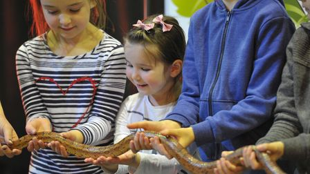 Youngsters were able to hold a snake at Ipswich Museum. Picture: SARAH LUCY BROWN