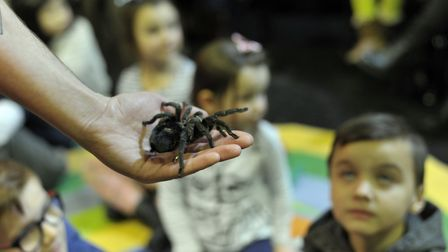 Everyone got the chance to see a friendly tarantula. Picture: SARAH LUCY BROWN