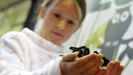 Children got the chance to hold a tarantula. Picture: SARAH LUCY BROWN