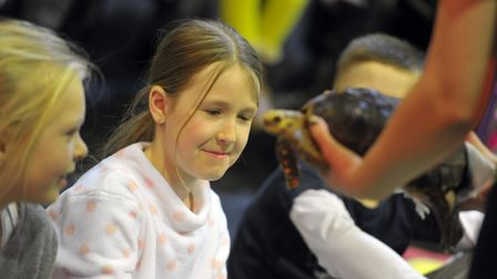 A tortoise being shown to the audience. Picture: SARAH LUCY BROWN