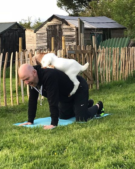 Goat Yoga will be coming to Trinity Park Picture GOAT YOGA