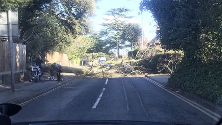 A stretch of Belstead Road in Ipswich was blockied by a tree brought down by Storm David. Picture: C