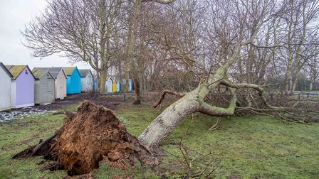 Beach huts floated and tree blown down by storms Picture: TIM GARRETT-MOORE