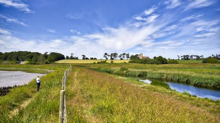 Summer time at Ramsholt Suffolk Picture: BARRY PULLEN