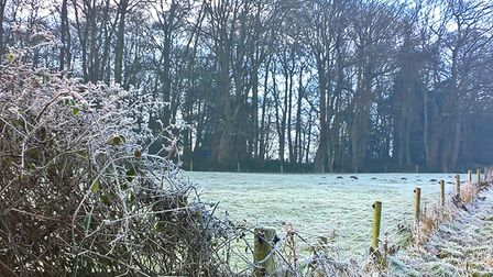 Frost in the morning in Martlsham. Picture: STEVE COATES