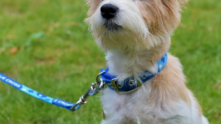 Flora the dog features in a new Oasis clothing line Picture: BLUE CROSS