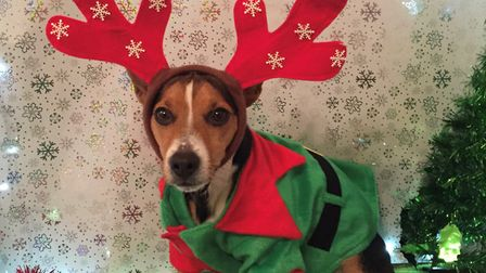 Will you be dressing up your pet this Christmas? Picture: ABBI LAWRENCE