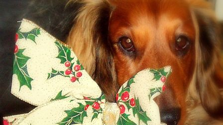 Is your pet the cutest in Ipswich this Christmas? Picture: JAN SMITH