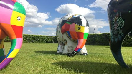 Elmer Armstrong the astronaut elephant Picture: ADRIAN RAWLINSON