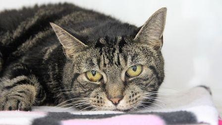 This nervous little soul can't wait to find a new home she can truly relax in Picture: RSPCA SUFFOL