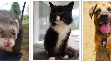 Could you offer a home to one of these adorable pets? Pictures: RSPCA SUFFOLK