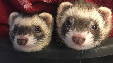 Poppy and Belle are looking for their new forever home Picture:RSPCA