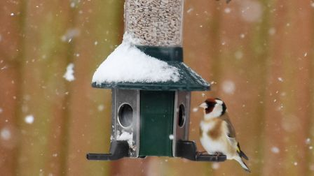 Sleet and snow showers are expected in the region today Picture: JANICE POULSON