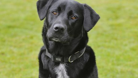 Bowza the dog, who has been hailed as a hero in his home town of Hadleigh Picture: SU ANDERSON