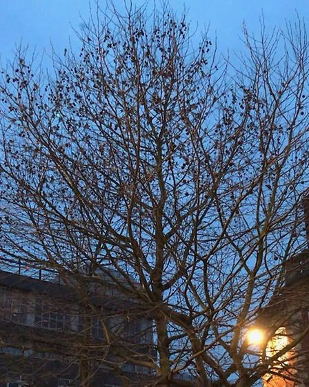 Pied wagtails have been spotted at Giles Circus Picture: ARCHANT