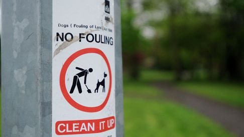 Ipswich council has confirmed orders banning dog fouling. Picture: ARCHANT