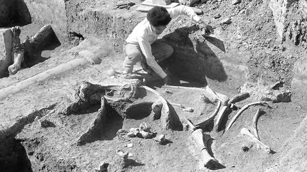 The mammoth bones on the site of Stoke High School, Maidenhall Approach, Ipswich, in May 1976. Pictu