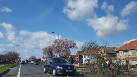 A tree has fallen onto a car on the A1214 Valley Road, close to Westerfield Road Picture: WILL JEFFO
